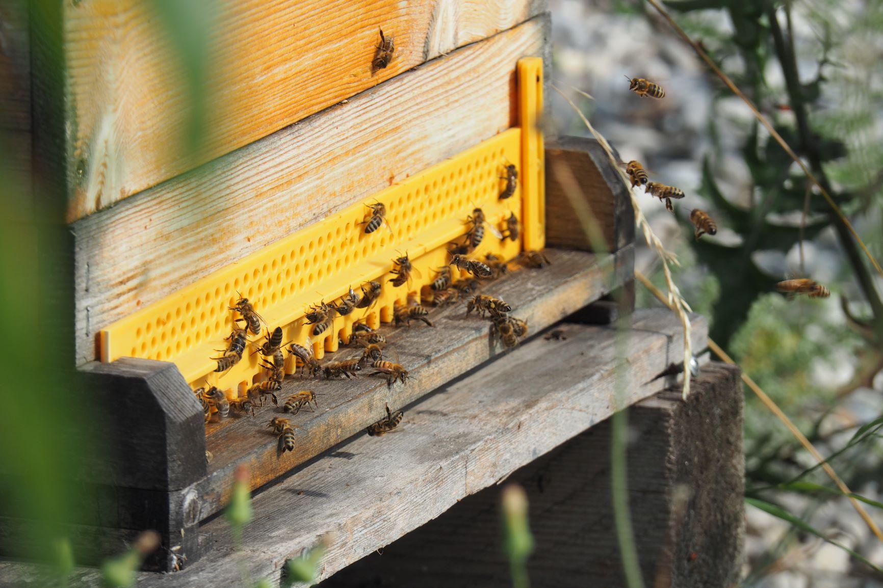 Bienenstock der Imkerei in Theresienfeld