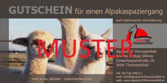 Alpakahof Theresienfeld Gutschein Alpaka Spaziergang
